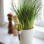 brussels herbs. singlei1
