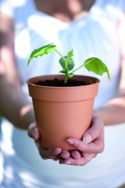Green basics growpot Ø35