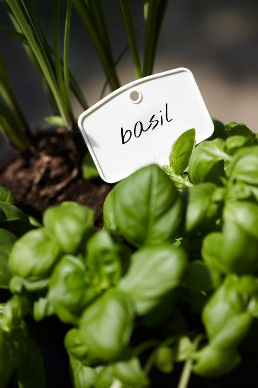 Green basics plantlabels small
