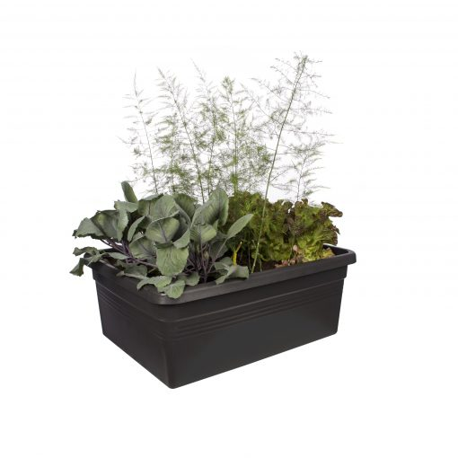 moveable garden with plants
